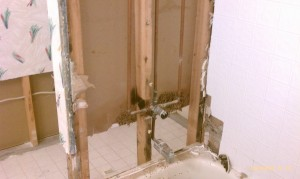 Mold Damage Remediation and Restoration Services | Code Red